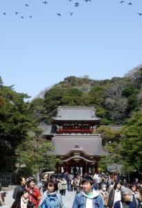 鶴岡八幡宮 (Tsurugaokahachiman-gû) in 鎌倉 (Kamakura).